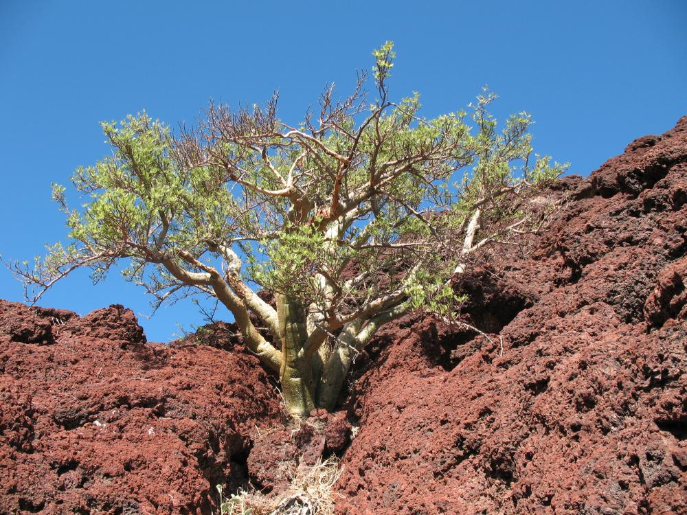 Photo of tree growing out of red rock